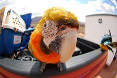 #parrot