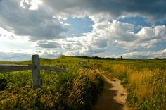 Martha's Vineyard, credit: Tracey Lee Carroll