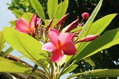 8/15(月)バリ島ウブドのお天気は晴れ。室内温度27.8℃、湿度72%。雨の日が続いていましたが、今日はとっても良い天気♪爽やかなお天気です。