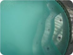 If Your Pool Is Green And Cloudy Even After Shocking Swimming Pools Pool Maintenance And Backyard