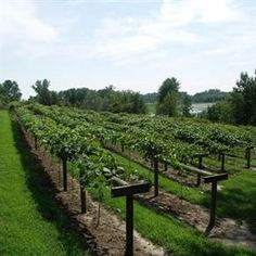 Sip Your Way along Minnesota's Wine Trails