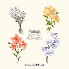 E Flowers, Hand Drawn Flowers, Flower Images, Floral Illustrations, Watercolor Flowers, Flower Designs, Free Design, Our Wedding, Vector Free