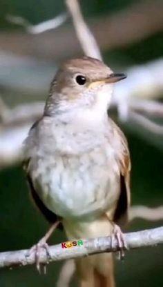 Good Morning Beautiful Images, Beautiful Nature Scenes, Morning Images, Nature Animals, Animals And Pets, Funny Animals, Cute Animals, Pretty Birds, Beautiful Birds