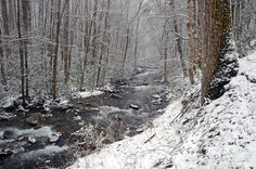 It's snowed today in the Smoky Mountains! Such a beautiful winter wonderland!