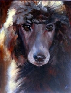 Silver Poodle painting 'Reba' by Sue Gardner.  Winsor and Newton Artists Acrylics, stretched canvas 35 x 25