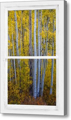 Golden #Aspen #Forest View Through White Rustic Distressed #Window Canvas Print / Canvas Art By James Bo  Insogna #insognaGallery #WindowArt