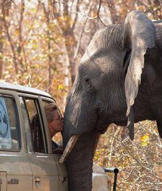 Oh how wonderful for this woman. Maybe she works with this elephant in a safari park or something.
