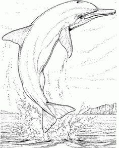 die 40 besten bilder von delfine | delphine, delfine bilder und delphin bilder