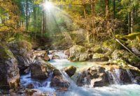 A heavenly light shines through forest branches onto a rushing stream in this jigsaw puzzle by Castorland.Castorland is based out of Poland, and exports their puzzles to more than 40 countries around th Puzzle Shop, Puzzle Art, Countries Around The World, Around The Worlds, Shops, Ecommerce Solutions, Old Barns, Love Painting, Waterfalls