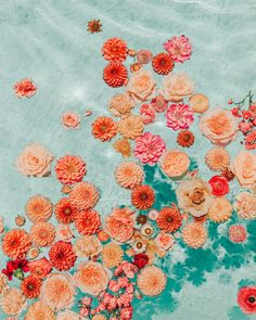 Bedroom Wall Collage, Photo Wall Collage, Picture Wall, Aesthetic Backgrounds, Aesthetic Iphone Wallpaper, Aesthetic Wallpapers, Orange Aesthetic, Flower Aesthetic, Flower Wallpaper