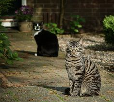 #two cats  Like,Repin,Share, Thanks!