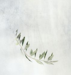 Olive Branch by Kelly Leahy at http://pleuvoir.tumblr.com/post/44259870066/kelly-leahy-olive-branch-olive-branch-olive via gujiguji on tumblr