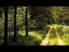 Germany Forest Road Wallpaper Landscape Nature Wallpapers in jpg Scenery Wallpaper, Tree Wallpaper, Landscape Wallpaper, Nature Wallpaper, Summer Wallpaper, Wallpaper Desktop, Photo Wallpaper, Wallpaper Backgrounds, Michael Jackson