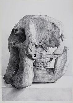 Claudio Bravo, Cráneo de elefante (Elephant Skull), 2008 Lithograph 41 3/4 x 29 1/2 inches