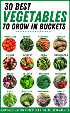 30 Best Vegetables To Grow In Buckets - Container Gardening - Pot Garden. Grow vegetables in buckets. Growing Vegetables In Containers, Growing Veggies, Container Gardening Vegetables, Planting Vegetables, Container Plants, Growing Plants, Vegetables To Grow, Growing Peppers, Indoor Vegetable Gardening