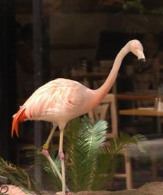 Taking the kids to Vegas?  They'll have fun, here's how...: Flamingo Wildlife Habitat