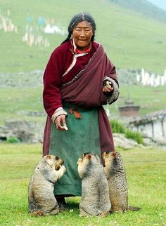 Tibetan woman living in a farmer village high in the Himalaya made friends with local Marmots offering them food