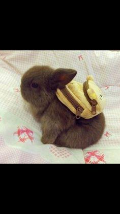 Sød kanin med rygsæk