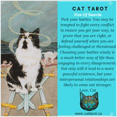 Monthly readings on my YouTube channel: www.youtube.com/c/cattarot Book your reading: www.cattarot.ca Love, Cat #tarot #tarotcards Choose Your Battles, Way Of Life, Tarot Cards, You Got This, Channel, Challenges, Feelings, Reading, Cats