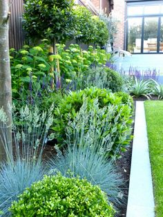 Showcase Gardens - Hampstead Garden DesignHampstead Garden Design In regards to flower care, hydrangeas are not so completely different from other plants. Garden Types, Diy Garden, Green Garden, Small Garden Planting Ideas, Flower Gardening, Small Garden Ideas Low Maintenance, Very Small Garden Ideas, Plants For Small Gardens, Modern Planting