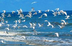 grand isle, la | Grand Isle Louisiana | Flickr - Photo Sharing!