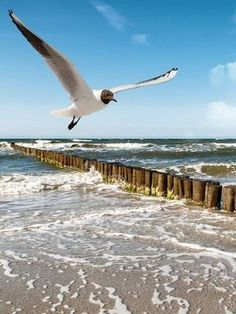 Sylt is the largest North Frisian island Ocean Beach, Ocean Waves, Nicolas Vanier, North Sea, Sea Birds, Beach Scenes, Terra, Under The Sea, Beautiful Beaches