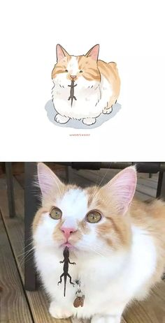 Cute Animal Memes, Funny Animal Pictures, Funny Animals, Funny Dog Videos, Funny Dogs, Kittens Cutest, Cute Cats, Pet Trust, Kitten Drawing