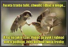 Funny Bird Quotes regarding Inspire - Daily Quotes AnoukInvit Cute Animal Quotes, Bird Quotes, Funny Animal Photos, Cat Quotes, Cute Funny Animals, Funny Pictures, Qoutes, Funny Quotes, Animal Fun