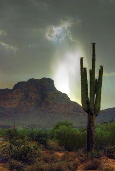Storm over Red Mountain - Arizona - Saguaro Art Inspo, Inspiration Art, Desert Dream, Desert Life, Desert Sunset, Nevada, Beautiful World, Beautiful Places, New Mexico