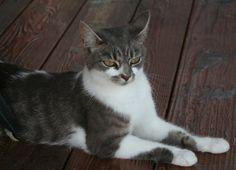 My cat Peanut Butter. Barbara, Oxford, Ohio. 10/18/12