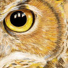 Eye close-up of a Great Horned Owl  -  revelleimagemaker.blogspot.com