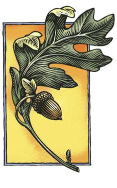 Rik Olson Arts and Graphics - oak leaf and acorn, woodcut, linocut Botanical Illustration, Illustration Art, Illustrations, Acorn And Oak, Oak Leaves, Tree Leaves, Autumn Leaves, Art Graphique, Arts And Crafts Movement