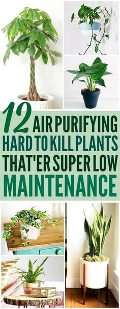 These 12 air purifying plants are THE BEST! I'm so glad I found these AWESOME tips! Now I have some great ideas for low maintenance air purifying plants for my home! Definitely pinning! #houseplantsairpurifying