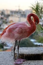 Resultado de imagen para flamingo en fieltro