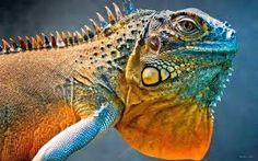 Image result for colorful chameleon