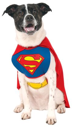 Rubies Costume DC Heroes and Villains Collection Pet Costume - Superman ** Unbelievable dog item right here! : Dog Apparel and Accessories