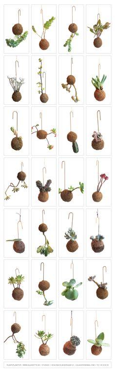 plantegalakse og planteplaneter håndlavet af Kaja Skytte - Stilleben. // Hanging planters and succulents