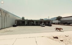You know you are in for a weird day when the google street view features a tiger casually strolling about.