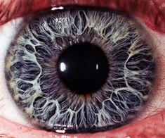 У близоруких глазное яблоко больше