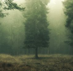 fog. mist. photograph. tree. nature. morning. calm. | RP » .