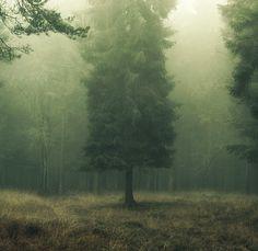 fog. mist. photograph. tree. nature. morning. calm.   RP » .