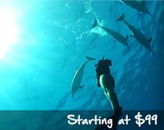 swimming with dolphin hawaii. Swimming tour in Hawaii. custom private tour in Oahu