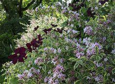 Brenckle Eric - Rustica - Jardin La Bonne Maison