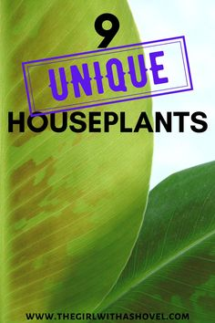 Are you looking to add something out of the ordinary to your plant collection? Look no further than this amazing list of unique houseplants! Unique House Plants | Unique House Plants Houseplant | Unusual Houseplants Unique | Unique Plants Houseplant | Rare Houseplant |