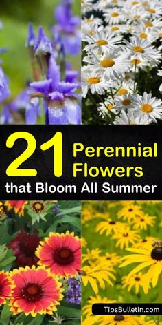 21 perennial flowers that bloom all summer. Many perennial flowers are low maintenance making them the perfect choice for various landscapes needing splashes of color. Lighting requirements range from full sun to shade and may affect blooming ability. Partial Shade Perennials, Shade Flowers Perennial, Fall Perennials, Deer Resistant Perennials, Long Blooming Perennials, Perennial Grasses, Shade Garden Plants, Flowers Perennials, Ornamental Grasses