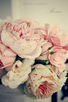 Beautiful roses from a garden