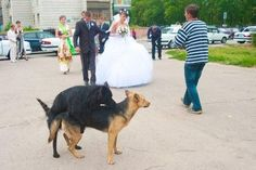 Disparatadas fotos de boda