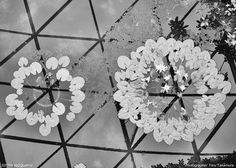 熊谷正の『美・日本写真』(2014/09/02更新)写真⑤ 写真/高村達