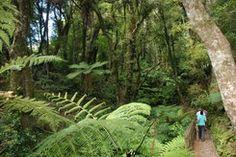 Ferns and hikers, Te Urewera National Park http://www.walkinglegends.com/walks/waikaremoana-discovery/