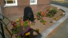 Our gardening group in Worcester is working wonders for our service users. The plants outside the office seem to be feeling the benefits too!